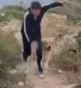 Gianni Morandi brutta caduta mentre fa jogging con il suo ca